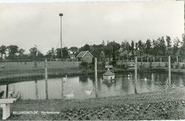Bellingwolde 1972; Hertenkamp (zonder Herten) - Gelopen. (W. Meins - Bellingwolde) - Pays-Bas