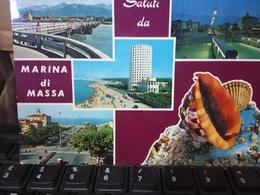 MARINA DI MASSA VEDUTE  SALUTI  CONCHIGLIA SHELL  CONCHIGLIE VB1978 HD10166 - Massa