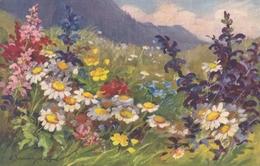 Fiori Di Campo  -  Edit.  St. Z  F. - Flowers