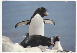 AK Falkland Islands Rockhopper Penguins. Society Expeditions. Project Antarctica Postalisch Gelaufen 2 Scans 16,4x11,4cm - Falkland