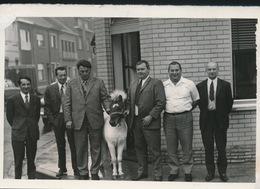WETTEREN     -- FOTO 1973   +-  14 X 8  CM  ---   OVERHANDIGING PONY - Wetteren