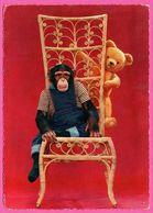 Monkey - Singe Sur Une Chaise Haute En Osier Et Ourson - Nounours - Fauteuil - Edit. KRUGER - Monos