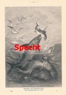 918 F. Specht Schwertfisch Thunfisch Kampf Druck 1901 !! - Prints