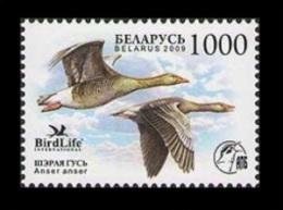 Belarus 2009 Mih. 762 Fauna. Bird Of The Year. Greylag Goose MNH ** - Belarus