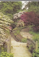 AO01 Royal Botanic Gardens, Kew, Viburnum Plicatum In The Water Garden - London Suburbs