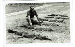 Photo 12,5 Cm X 18 Cm - Chasse Au Crocodile - Crocodiles - Hunting - 2 Scans - Altri