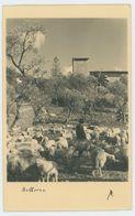 """Foto AK 110 Spanien - """"Mallorca"""" 1934 - Mallorca"""