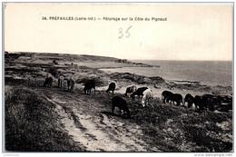 44 PREFAILLES - Paturage Sur La Cote Du Pignaud - Préfailles