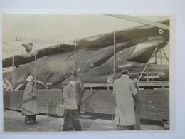 (1962)  FRANCE   Chasse à La Baleine  -  Whaling  - Coupure De Presse Originale (encart Photo) - Documents Historiques