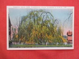 Weeping Birch Tree  Flushing  New York City  Long Island Ref 3439 - Long Island