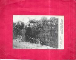LA GUERRE 1914/1915  -  Artillerie Anglaise Pièce De 380 Dissimulée Dans Les Feuillages - Région Du Nord - ROY1 - - War 1914-18