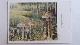 CHAMPIGNON CHAMPIGNONS PLANCHE LII LEPIOTE 3 MODELES PUB TERRAMYCINE - Mushrooms