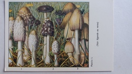 CHAMPIGNON CHAMPIGNONS PLANCHE L COPRIN CHEVELU PIE NOIR D ENCRE PUB TYZINE - Mushrooms