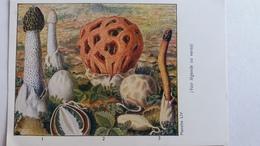 CHAMPIGNON CHAMPIGNONS PLANCHE LIV PHALLE PUANT CLATHRE SATYRE DES CHIENS    PUB TERRAMYCINE - Mushrooms
