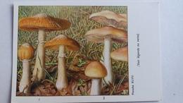 CHAMPIGNON CHAMPIGNONS PLANCHE XLVIII PHOLIOTE AUX CHEVRES HEBELOME  PUB TYZINE - Mushrooms