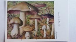 CHAMPIGNON CHAMPIGNONS PLANCHE XLVII ENTOLOME LIVIDE ROSE GRIS D AUTOMNE  PUB TYZINE - Mushrooms