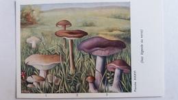 CHAMPIGNON CHAMPIGNONS PLANCHE XXXVI ARGOUANE DES PRAIRIES TRICHOLOME BLANC NOIR NU  PUB TERRAMYCINE - Mushrooms