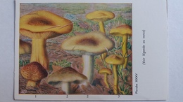 CHAMPIGNON CHAMPIGNONS PLANCHE XXXV TRICHOLOME EQUESTRE JAUNET TRICHOLOME SOUFRE   PUB TERRAMYCINE - Mushrooms