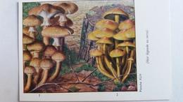 CHAMPIGNON CHAMPIGNONS PLANCHE XLIV ARMILLAIRE DE MIEL HYPHOLOME EN TOUFFES   PUB TYZINE - Mushrooms
