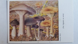 CHAMPIGNON CHAMPIGNONS PLANCHE XLIII CLITOCYBE NEBULEUX EN COUPE EN ENTONNOIR    PUB TYZINE - Mushrooms