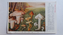CHAMPIGNON CHAMPIGNONS PLANCHE XXI HYGROPHORE  6 MODELES    PUB TERRAMYCINE CHAMPIGNONS D EUROPE ROGER HEIM - Mushrooms