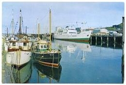 NEW ZEALAND : BLUFF HARBOUR - FERRY M.V. WAIRUA & BLUFF FISHING FLEET (10 X 15cms Approx.) - Ferries