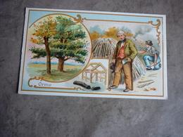 Ancienne Chromo Série Les Arbres Orme - Collections