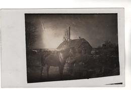 +2951,  FOTO-AK, WK I, Kalnciems, Deutsch: Kalnzeem,  Lettland, Pferdeappell - Guerre 1914-18