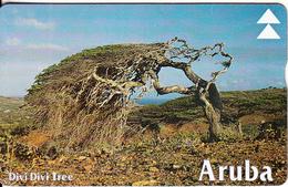 ARUBA(L&G) - Divi Divi Tree 2, CN : 608A, Used - Aruba