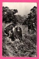 16 Cp - Singes - Patas - Gibbon - Gibraltar - Marin - Mexicains - Trompette - Humour - Cigarette - Accordéon - Foot - Monos