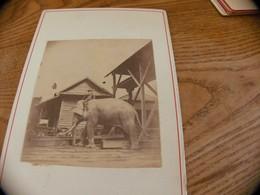 42  - Photo ,INDOCHINE, Elephant Travaillant Dans Une Scierie, Saïgon - Oud (voor 1900)