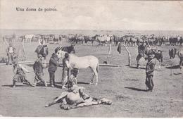 Argentine / Argentina - Una Doma De Potros - 1913 - Argentine