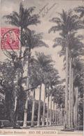 Brasil / Brésil - Rio De Janeiro - Jardim Botanico - 1909 - Rio De Janeiro