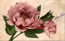 PIVOINE ROSE - Fleurs
