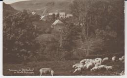 Postcard - Summer In Hill Bottom Near Worth Matravers - No Card No.. - Unused Very Good - Non Classificati