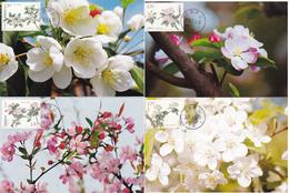 China 2018-6 Begonia Flower LOCAL MC 4V - Tarjetas – Máxima