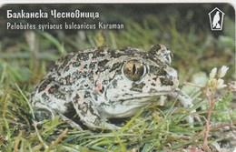 Bulgaria - Frog - Pelobates Syriacus Balcanicus Karaman - Bulgaria