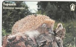 Bulgaria - Hedgehog - Erinaceus Concolor - Bulgaria