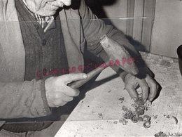 24- MONTIGNAC - GROS PLAN CASSAGE DE  NOIX DU PERIGORD- SCENE TYPIQUE PERIGOURDINE - RARE PHOTO ORIGINALE - - Profesiones