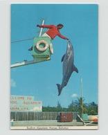 BAHAMAS SEAFLOOR AQUARIUM NASSAU - Bahamas
