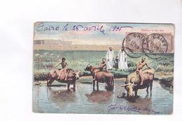 CPA BUFFALOS IN THE NILE   EN EGYPTE En 1905!    (voir Timbre Egypte) - Egypt