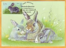 2019 Moldova Moldavie Fauna. Domestic Animals. Maxicard  Rabbit. - Farm