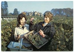 ENGLAND : HAMBLEDON VINEYARD (10 X 15cms Approx.) - Vines