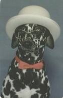 USATA- LIBERIA- CANI- (DOG) - Cani