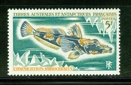 Poisson / Fish : Chaenichthye Rhinoceratus. Timbre Scott Stamp # 37.  T.A.A.F. (2292) - Terres Australes Et Antarctiques Françaises (TAAF)