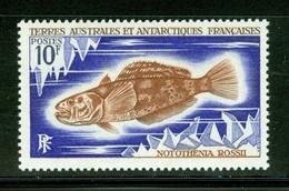 Poisson / Fish : Notothenia Rossii. Timbre Scott Stamp # 38.  T.A.A.F. (2293) - Terres Australes Et Antarctiques Françaises (TAAF)