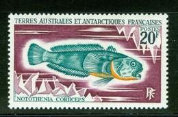 Poisson / Fish : Notothenia Coriiceps. Timbre Scott Stamp # 39.  T.A.A.F. (2294) - Terres Australes Et Antarctiques Françaises (TAAF)