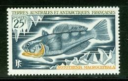 Poisson / Fish : Notothenia Macrocephala. Timbre Scott Stamp # 41.  T.A.A.F. (2295) - Terres Australes Et Antarctiques Françaises (TAAF)