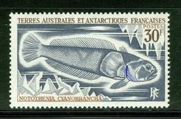Poisson / Fish : Notothenia Cyanobrancha. Timbre Scott Stamp # 42.  T.A.A.F. (2296) - Terres Australes Et Antarctiques Françaises (TAAF)