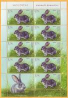 2019 Moldova Moldavie Fauna. Domestic Animals. Oryctolagus Cuniculus - European Rabbit Sheet - Farm